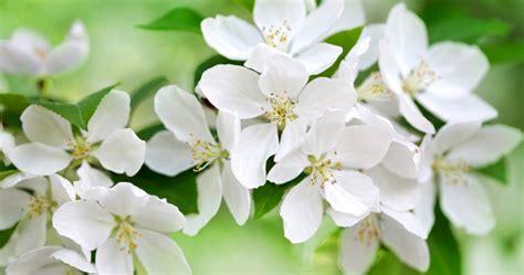 Joli Nom De Fleur by Bloomiq