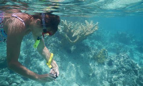best underwater best cheap waterproof 2018 budget underwater