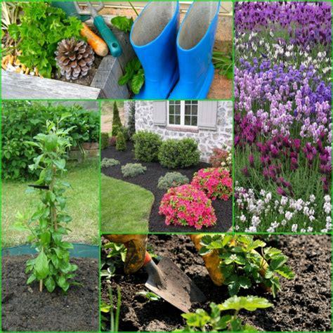 garten anpflanzen garten anpflanzen bl 252 hende b 252 sche und andere gartenpflanzen