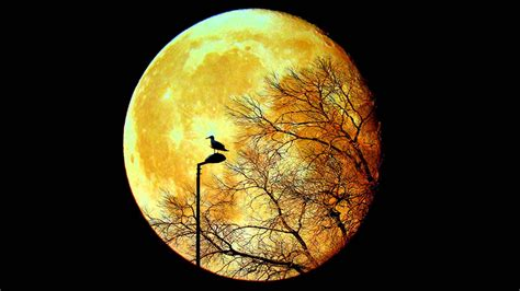 yellow moon wallpaper for desktop weneedfun