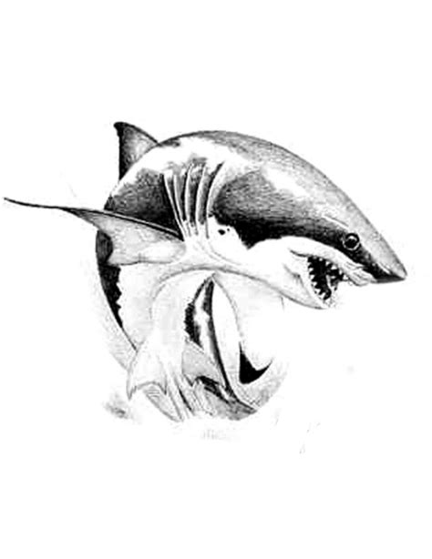 great white shark tattoo designs 62 best shark designs ideas