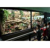 Reptile Terrarium Inspiration On Pinterest  Vivarium