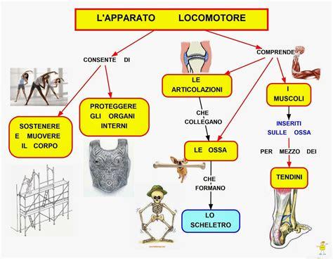 mappa organi interni mappa organi interni 28 images convegno rolfing una