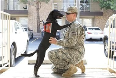 dogs for ptsd 12 facts about canine ptsd