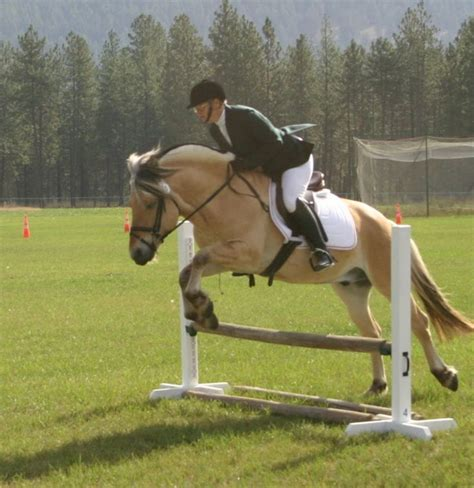 fjord horse jumping 1000 best images about norwegian fjord on pinterest