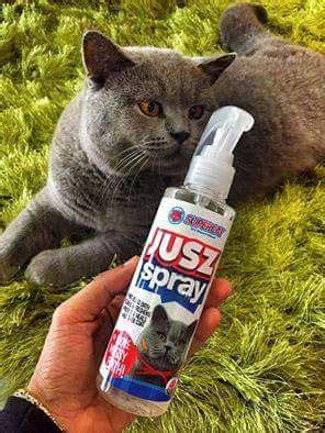 Makanan Kucing Kiten 2 jusz spray produk terbaik untuk peminat kucing que