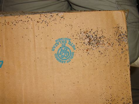 bed bug eggs size bed bugs eggs and feces on cardboard box bed bugs