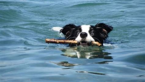 do dogs appendix 10 things you need to spend a great day at the with your hubpages