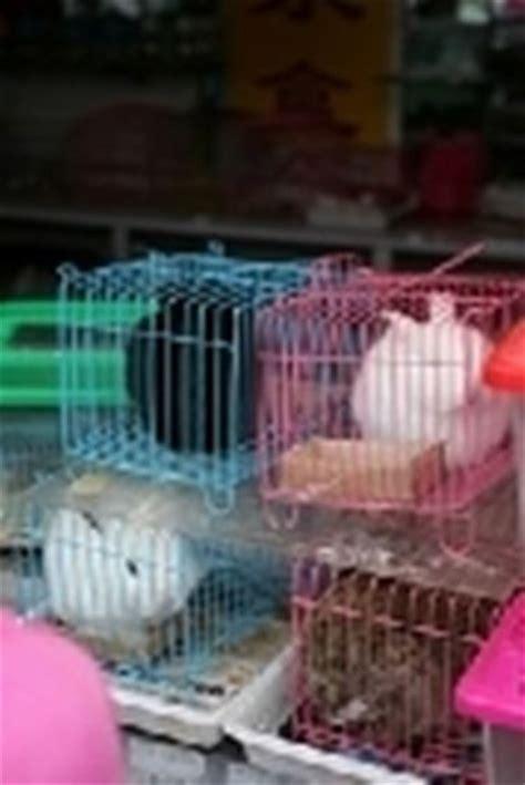 gabbia conigli nani gabbia conigli nani conigli nani