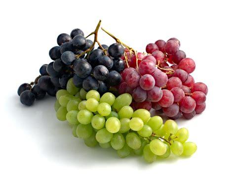 Bibit Benih Seeds Buah Anggur Wine Grape Fruit Common Grape Vine Home Vos Groente Fruit