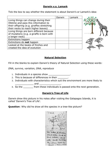 Darwin S Selection Worksheet Answers