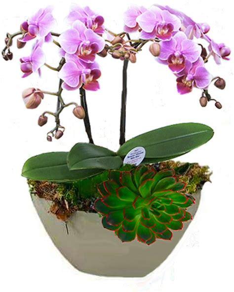 huiskamer echt bol orchidee met vetplant echt leuk voor kantoor