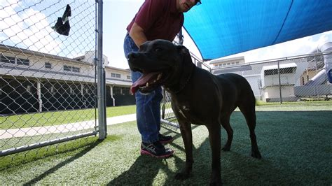 orange county pound longtime orange county animal shelter spurs controversy orlando sentinel