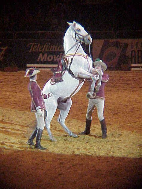 salon internacional del caballo 26 de noviembre de 2004