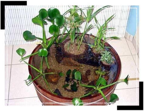 le jardin d eau en pot ou en demi tonneau