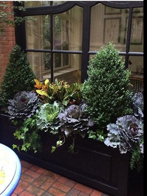 fall flowers for window boxes 25 best winter window boxes ideas on