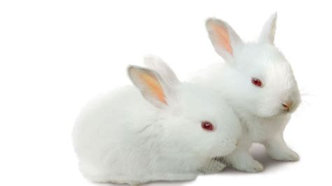 rabbit images rabbit wallpapers high quality free