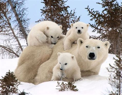 imagenes increibles de animales 18 fotos de animales en familia