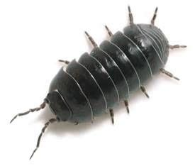 how to get rid of woodlice in my bathroom 142 best images about woodlice on pinterest tree fu tom