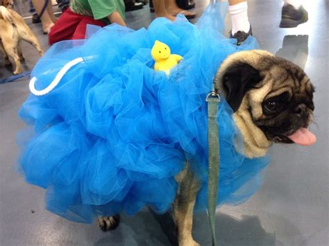 pug costume for dogs pug loofah costume costumes