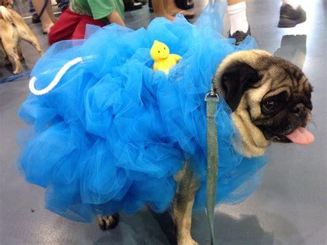 pug costume pug loofah costume costumes
