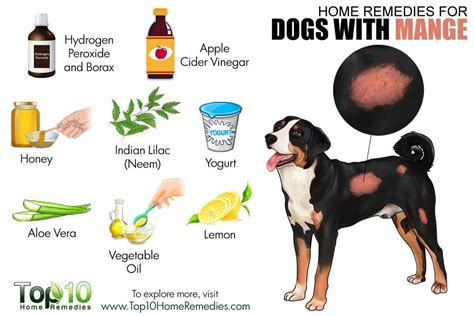 how to cure mange in dogs home remedies for dogs with mange top 10 home remedies