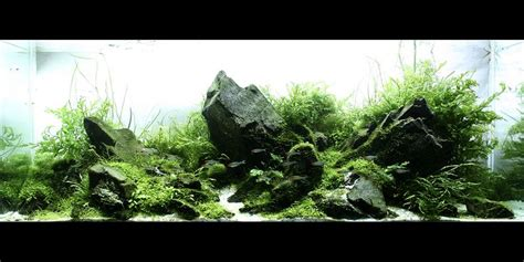 aquarium design usa 1000 images about fish tanks on pinterest