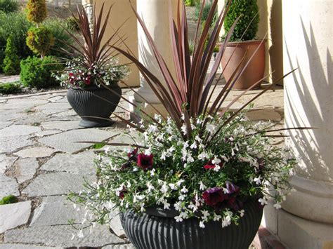 Container Plant Ideas Front Door by Eye Catching Entrances With Plants Suzanne Fletcher