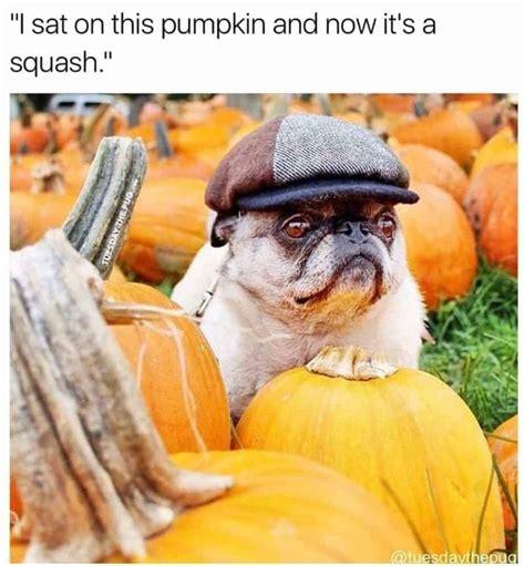 pug memes   internet guaranteed  lol