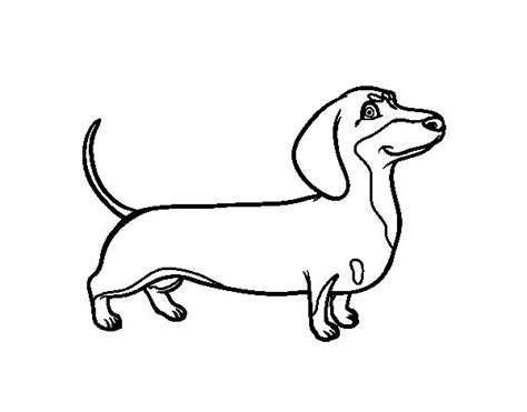 dachshund dog coloring page coloringcrew com