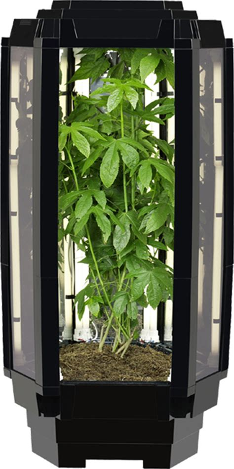 aspiring chef wins indoor growing system grand prize