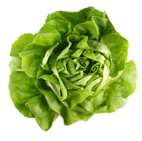 Iceberg Lettuce Elsa New Day Seed desperate gardener let us eat lettuce