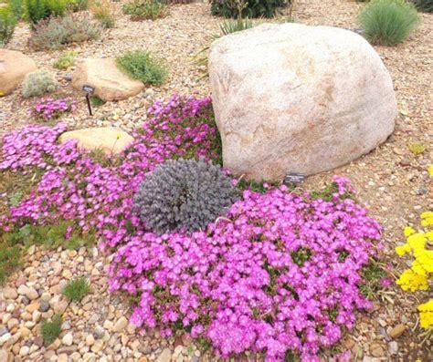 piante ricanti fiorite resistenti al freddo piante fiorite resistenti alla siccit 224 ed al freddo un