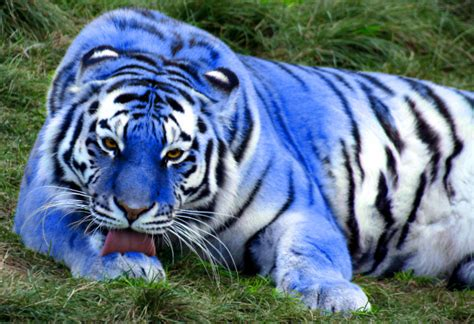 Blue Animals 5 essential blue animals for your lazer