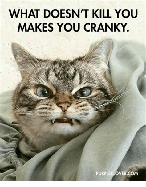 Cranky Meme - 25 best memes about cranky cranky memes