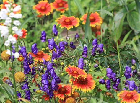Garten Pflanzen Erkennen by Giftpflanzen Gefahr Im Garten Garten Tipps Garten