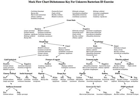 bacterial identification flowchart flow chart microbiology charts