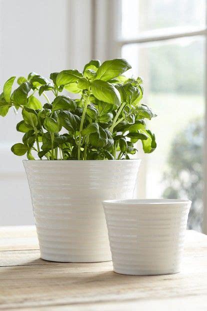 kitchen herb pots 808 best images about en cuisine les herbes