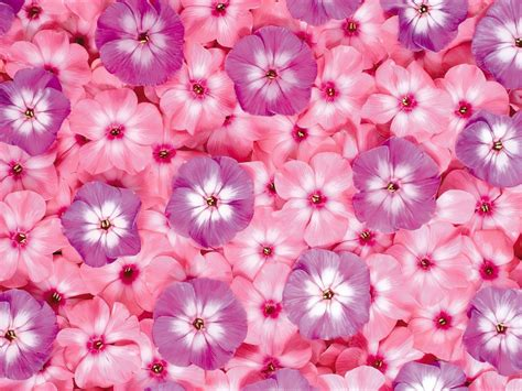 floral wallpaper for walls pink flowers wallpapers hd pictures one hd wallpaper
