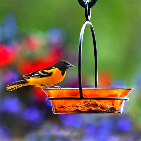 cuban bowl birdbath birdfeeder 8 quot orange