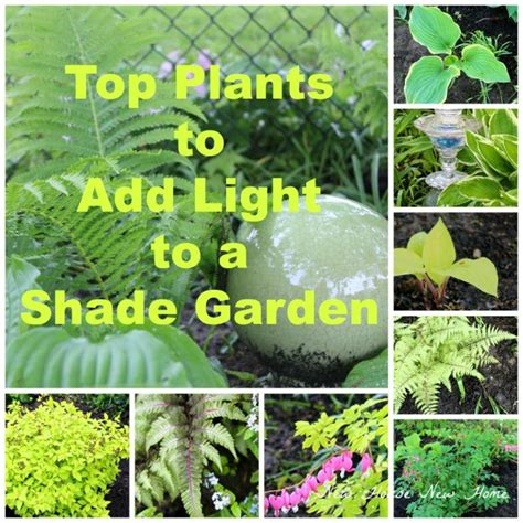 106 best images about evening shade plants for shady