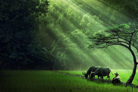 wallpaper mobile alam dalam kedamaian sang alam i just share about the