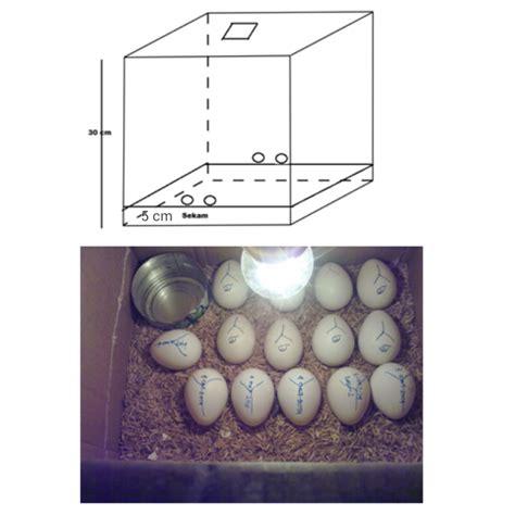 Mesin Tetas Telur Ayam Dari Kardus cara membuat mesin tetas telur sederhana dari kardus sukses
