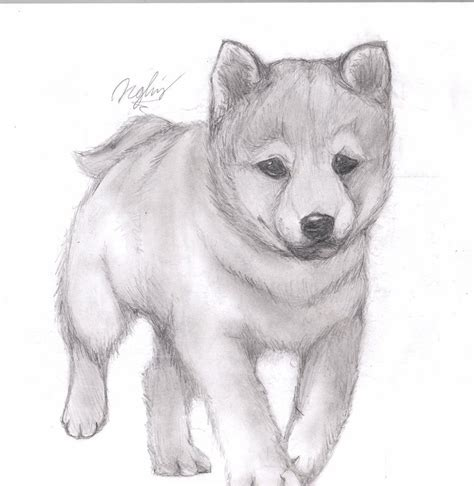 drawing of a puppy puppy pencil drawing by tsukipan on deviantart