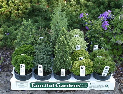 reliable foolproof plants for small gardens saga plants for small gardens incredible best plants for