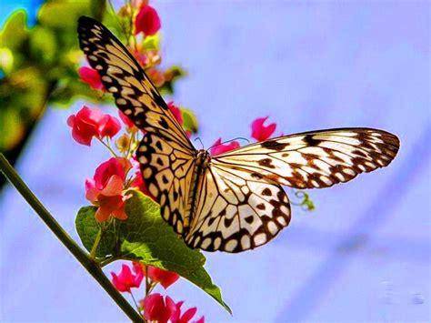 imagenes bellas mariposas banco de imagenes y fotos gratis imagenes de mariposas