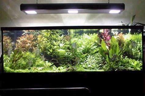 iluminacion de peceras el acuarista gt secciones gt la iluminaci 243 n en el acuario con