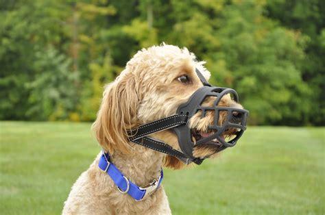 soft muzzle coastal soft basket muzzle