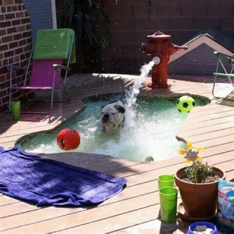 puppy pool pool built in porch awesome dogs