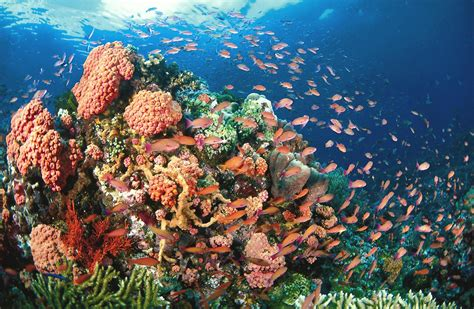 DIVING HAVEN   Planet Philippines